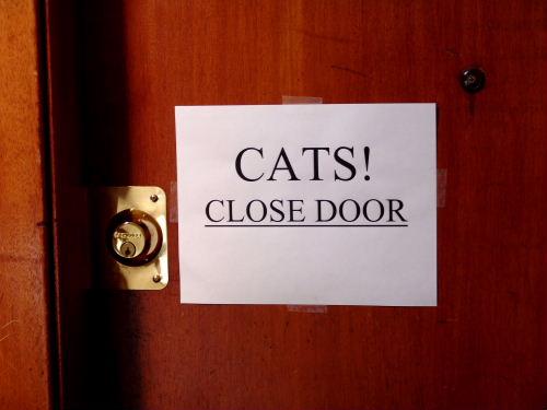catsclosedoor01.jpg